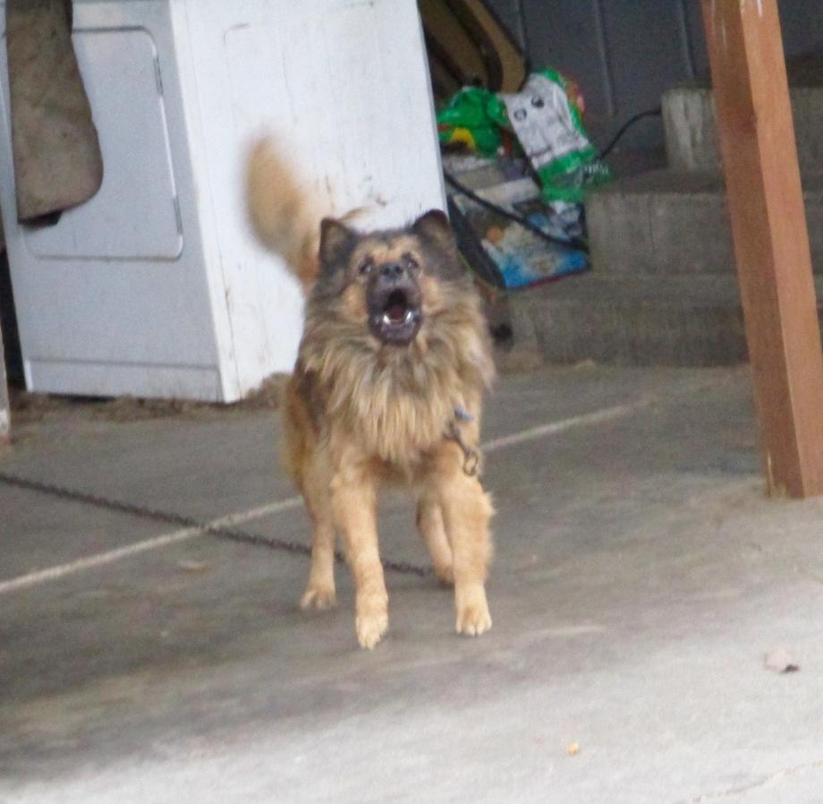 nathans-ugly-dog